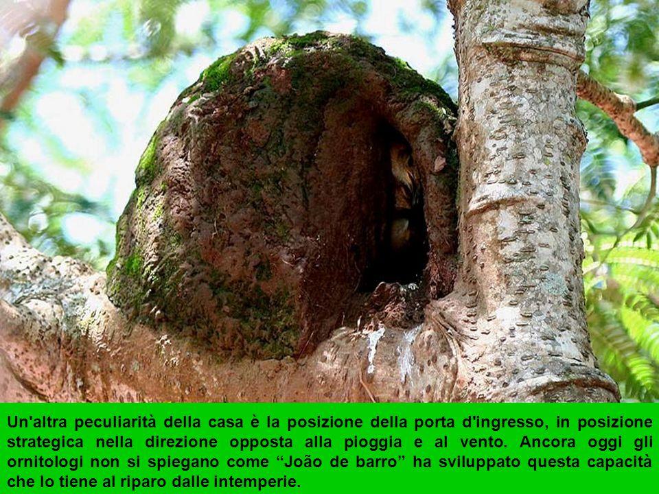 L'Ingegnosità del nido è la divisione in due sale.