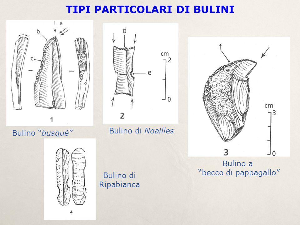"""Bulino """"busqué"""" Bulino di Noailles Bulino a """"becco di pappagallo"""" TIPI PARTICOLARI DI BULINI Bulino di Ripabianca"""
