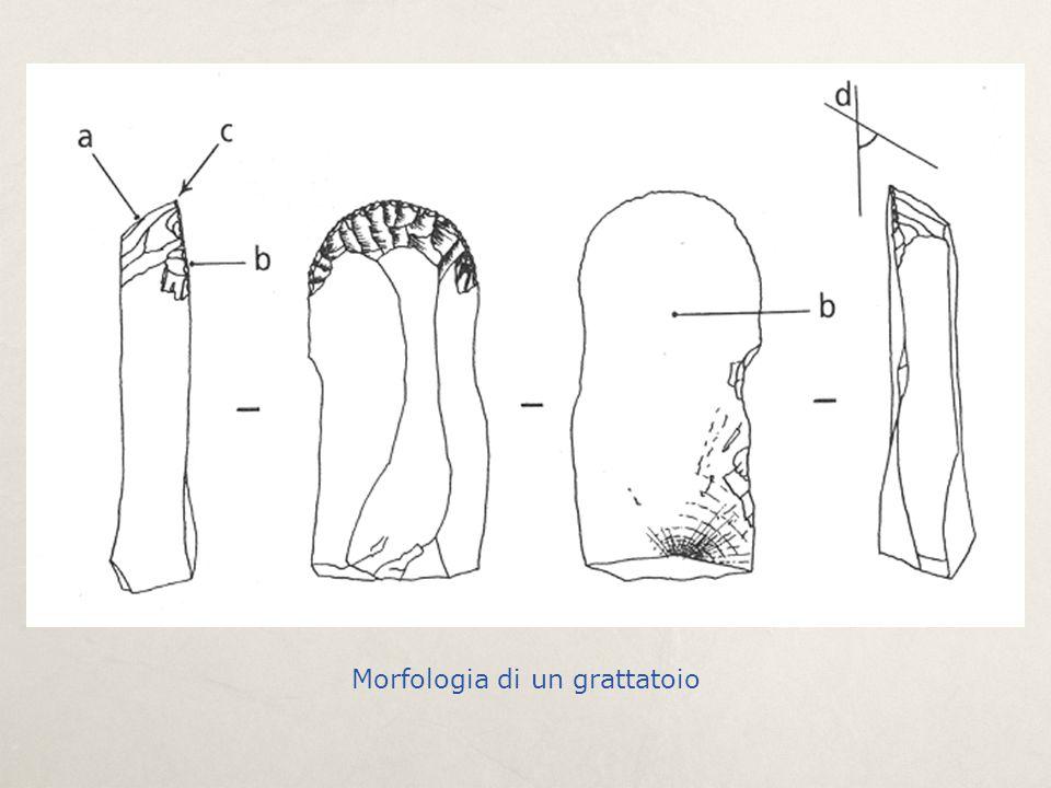 Morfologia di un grattatoio