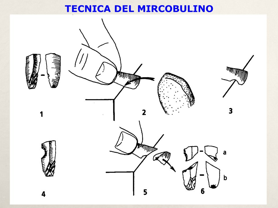 TECNICA DEL MIRCOBULINO