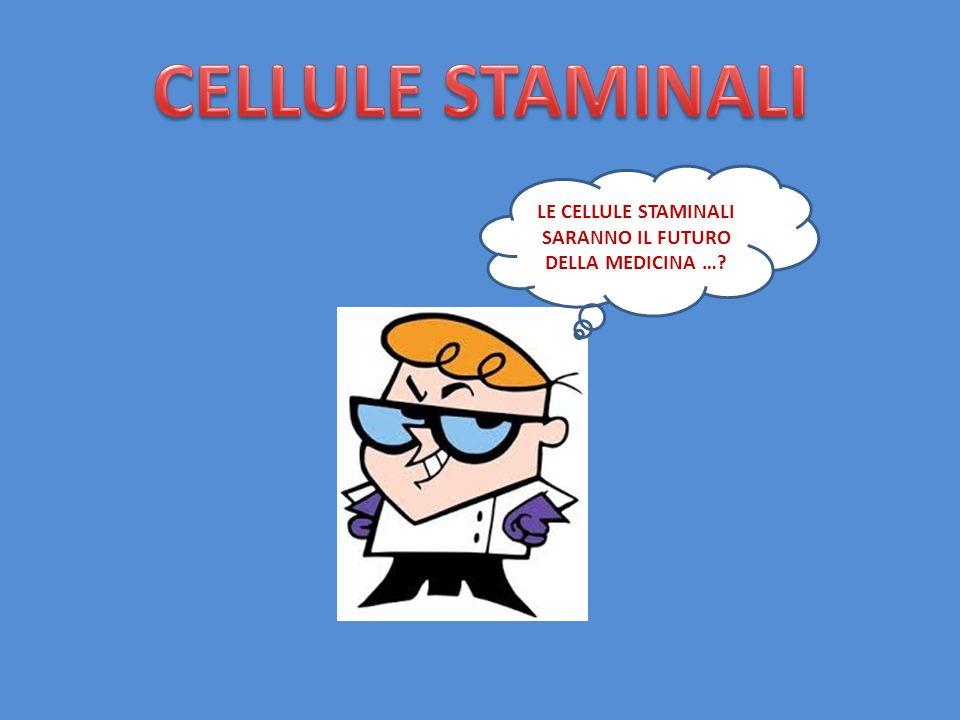 LE CELLULE STAMINALI SARANNO IL FUTURO DELLA MEDICINA …