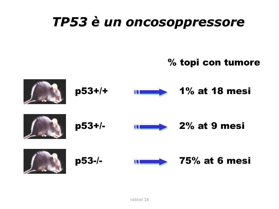 TP53 è un oncosoppressore p53+/+ p53+/- p53-/- 1% at 18 mesi % topi con tumore 75% at 6 mesi 2% at 9 mesi nabissi 14