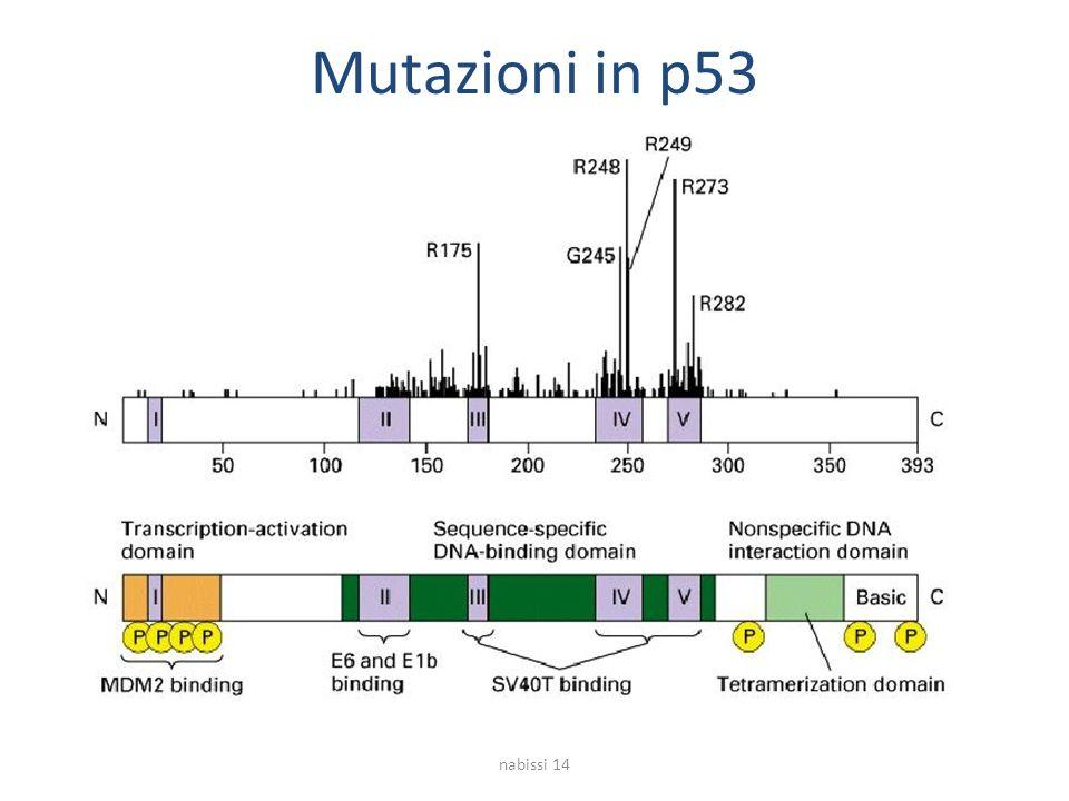 Mutazioni in p53 nabissi 14