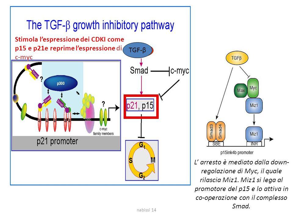 Stimola l'espressione dei CDKI come p15 e p21e reprime l'espressione di c-myc TGF-β L' arresto è mediato dalla down- regolazione di Myc, il quale rilascia Miz1.