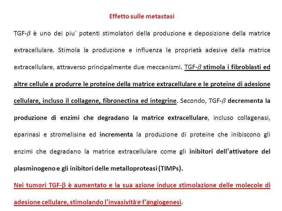 Effetto sulle metastasi TGF-  è uno dei piu' potenti stimolatori della produzione e deposizione della matrice extracellulare.