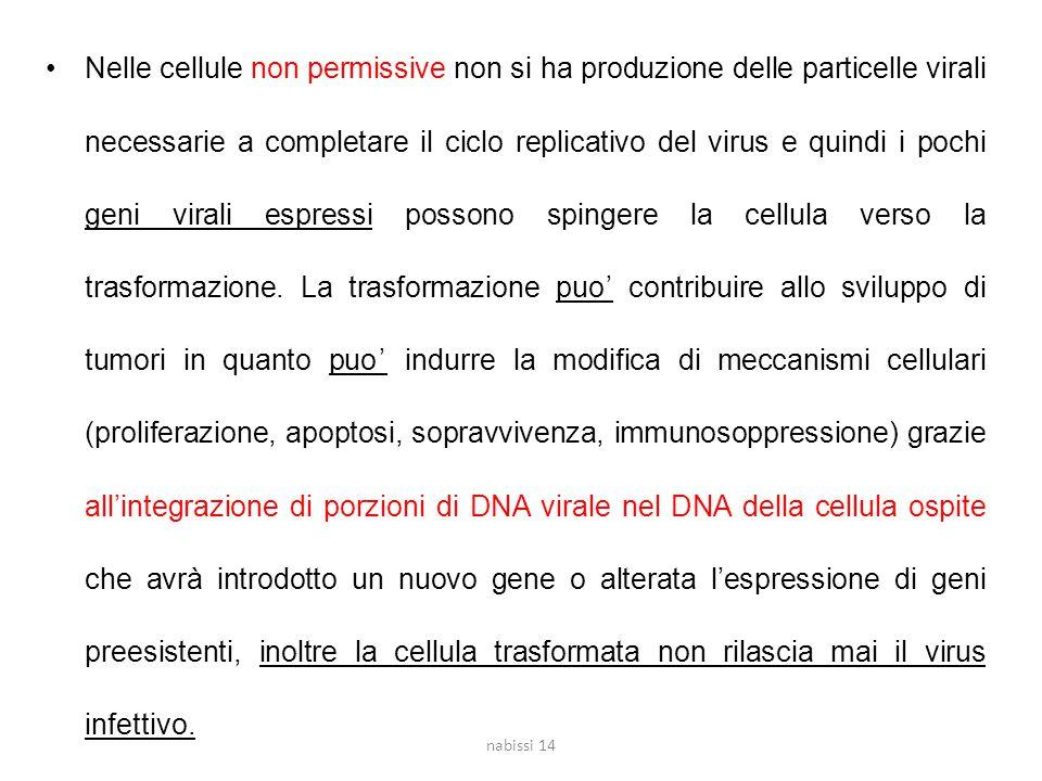 Nelle cellule non permissive non si ha produzione delle particelle virali necessarie a completare il ciclo replicativo del virus e quindi i pochi geni virali espressi possono spingere la cellula verso la trasformazione.