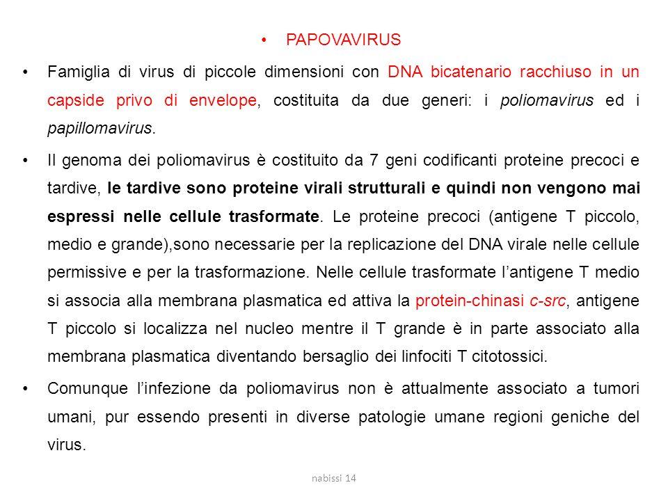 PAPOVAVIRUS Famiglia di virus di piccole dimensioni con DNA bicatenario racchiuso in un capside privo di envelope, costituita da due generi: i poliomavirus ed i papillomavirus.