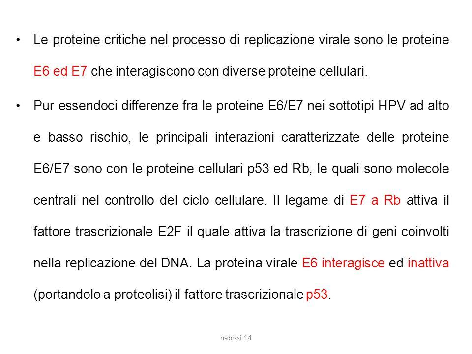 Le proteine critiche nel processo di replicazione virale sono le proteine E6 ed E7 che interagiscono con diverse proteine cellulari.