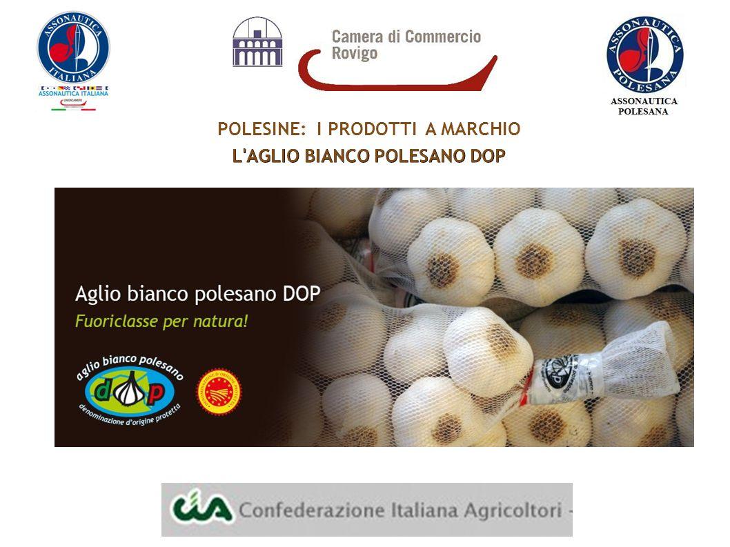 POLESINE: I PRODOTTI A MARCHIO L AGLIO BIANCO POLESANO DOP