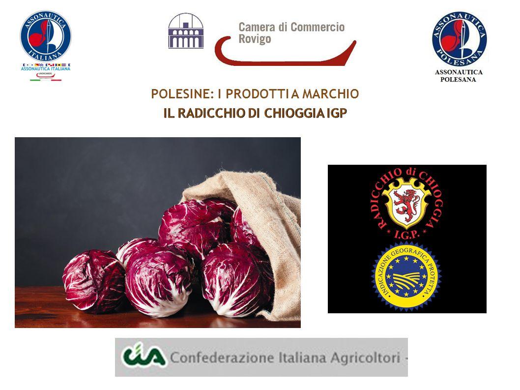 POLESINE: I PRODOTTI A MARCHIO IL RADICCHIO DI CHIOGGIA IGP