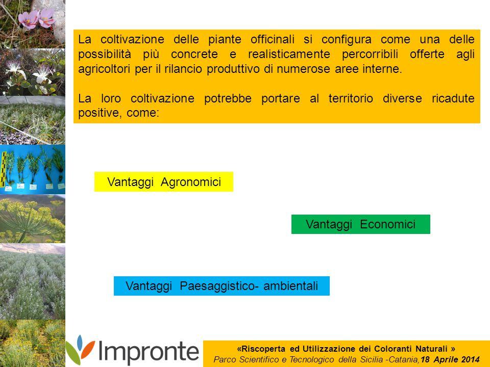 «Riscoperta ed Utilizzazione dei Coloranti Naturali » Parco Scientifico e Tecnologico della Sicilia -Catania,18 Aprile 2014 La coltivazione delle pian