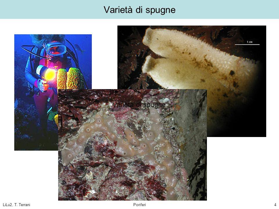 LiLu2, T. TerraniPoriferi4 Varietà di spugne