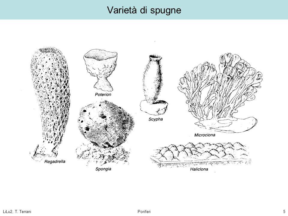 LiLu2, T. TerraniPoriferi5 Varietà di spugne