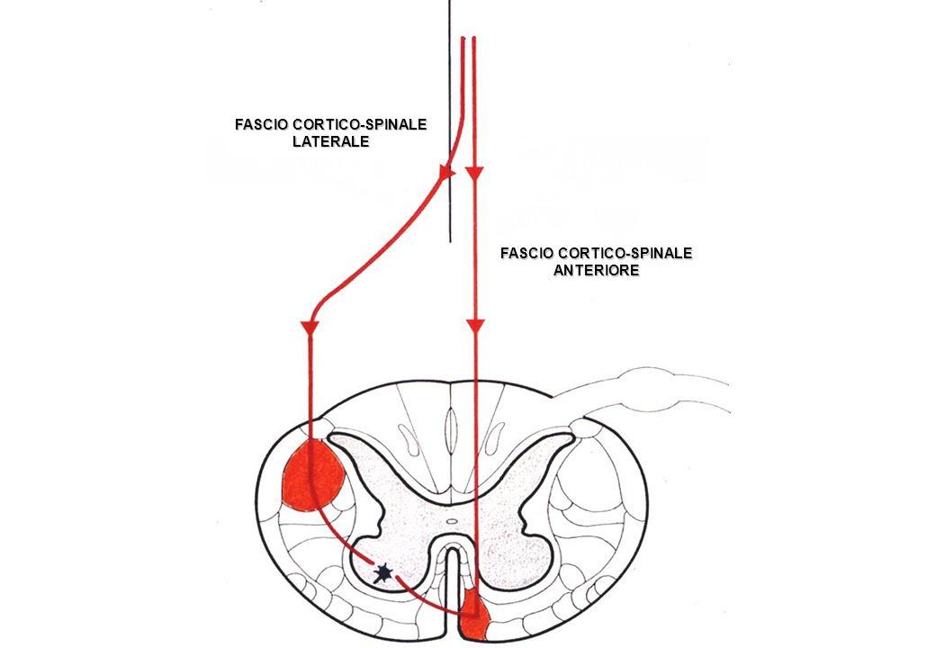 VIE MOTORIE EXTRAPIRAMIDALI Vie per riflessi connessi con afferenze da organi di senso (occhio, orecchio, vestibolo) vestibolo-spinale laterale vestibolo-spinale mediale tetto-spinale mediale