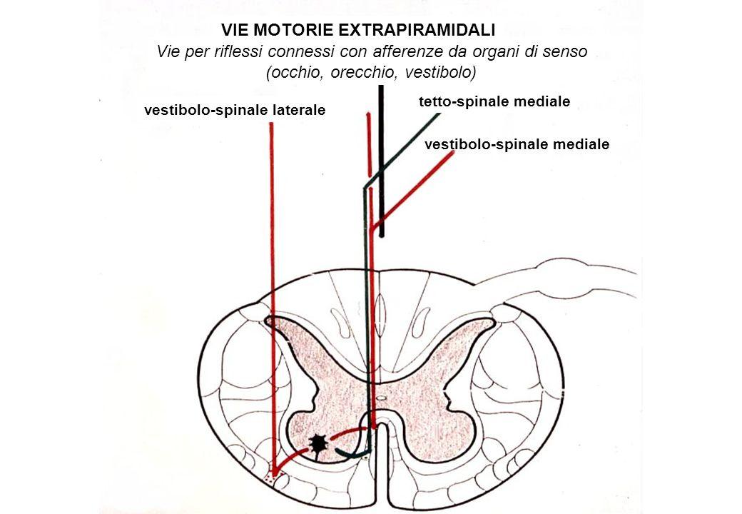 VIE MOTORIE EXTRAPIRAMIDALI Vie per riflessi connessi con afferenze da organi di senso (occhio, orecchio, vestibolo) vestibolo-spinale laterale vestib