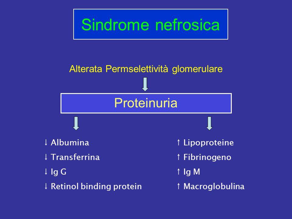 Alterata Permselettività glomerulare Sindrome nefrosica Proteinuria ↓ Albumina ↓ Transferrina ↓ Ig G ↓ Retinol binding protein ↑ Lipoproteine ↑ Fibrinogeno ↑ Ig M ↑ Macroglobulina