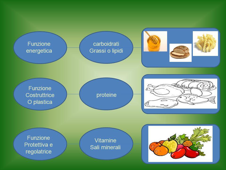 Funzione energetica carboidrati Grassi o lipidi Funzione Costruttrice O plastica proteine Funzione Protettiva e regolatrice Vitamine Sali minerali