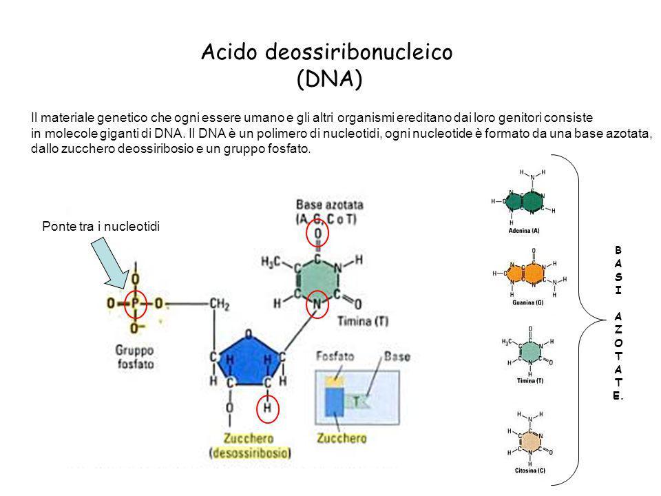 Acido deossiribonucleico (DNA) Il materiale genetico che ogni essere umano e gli altri organismi ereditano dai loro genitori consiste in molecole giga