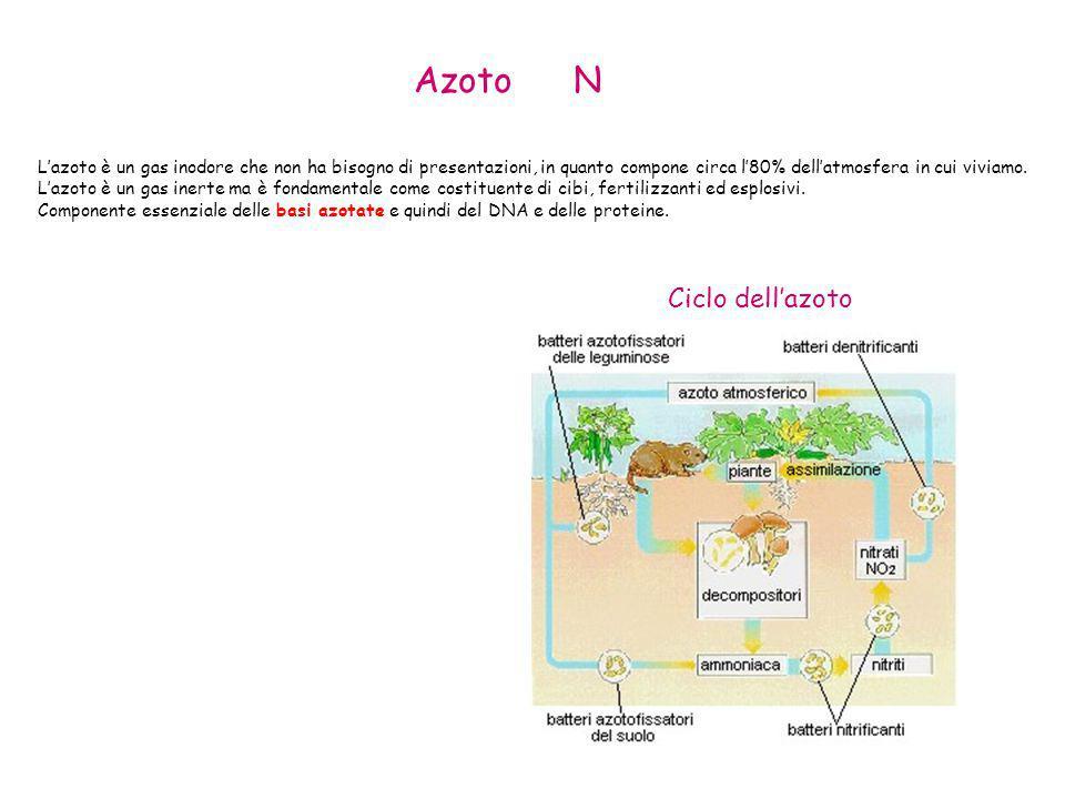 L'azoto è un gas inodore che non ha bisogno di presentazioni, in quanto compone circa l'80% dell'atmosfera in cui viviamo. L'azoto è un gas inerte ma