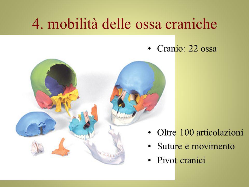 4. mobilità delle ossa craniche Cranio: 22 ossa Oltre 100 articolazioni Suture e movimento Pivot cranici