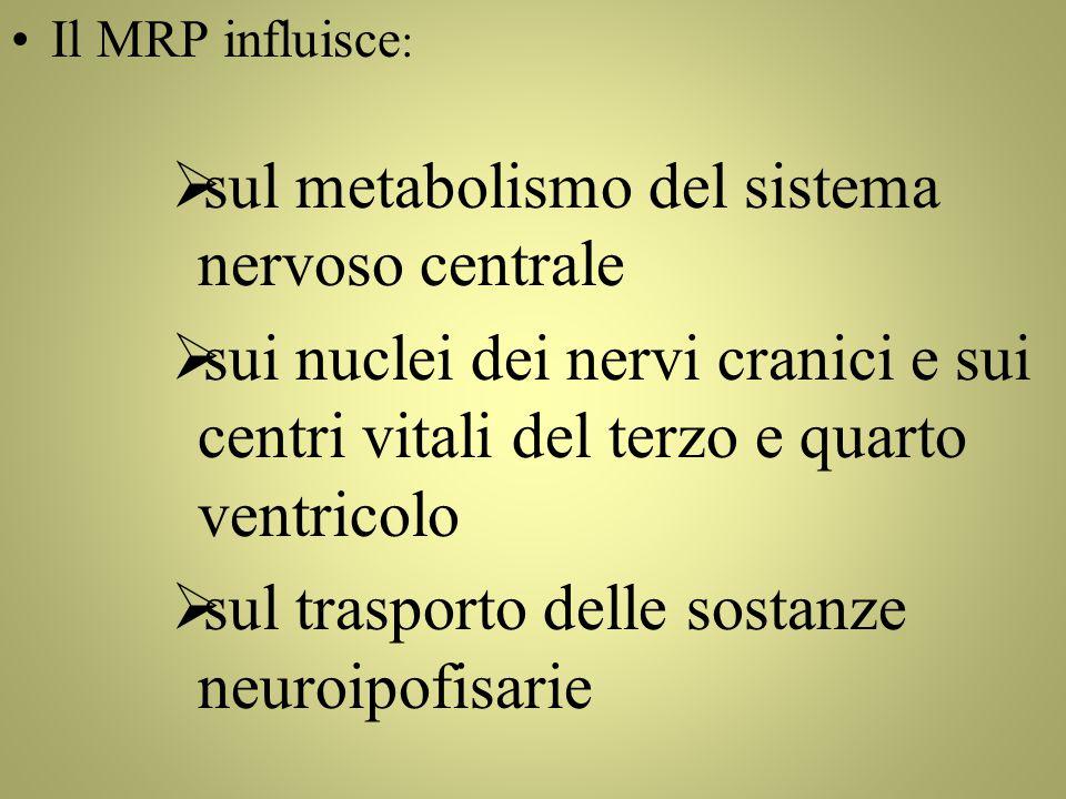 Il MRP influisce :  sul metabolismo del sistema nervoso centrale  sui nuclei dei nervi cranici e sui centri vitali del terzo e quarto ventricolo  sul trasporto delle sostanze neuroipofisarie