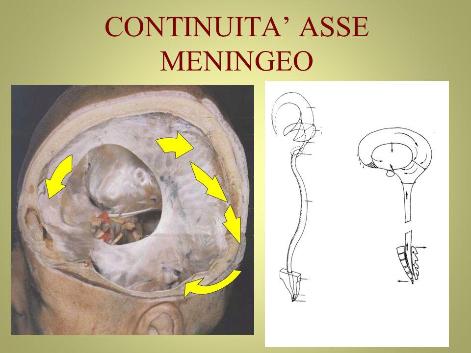 CONTINUITA' ASSE MENINGEO