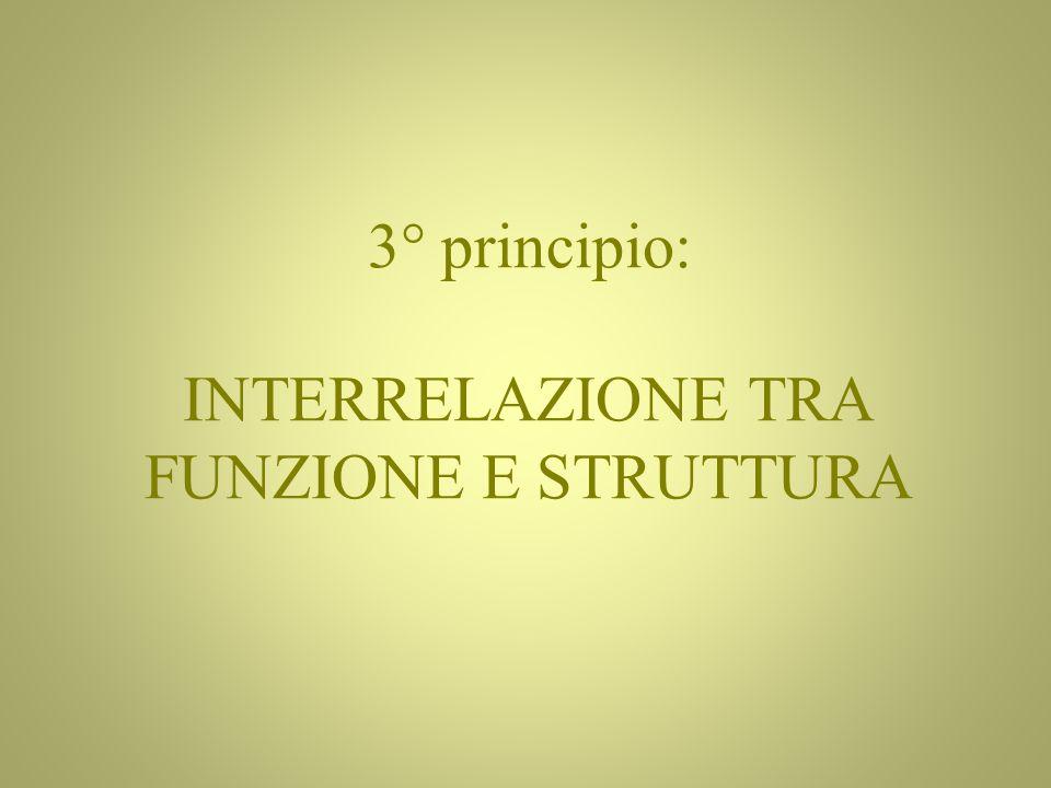 3° principio: INTERRELAZIONE TRA FUNZIONE E STRUTTURA