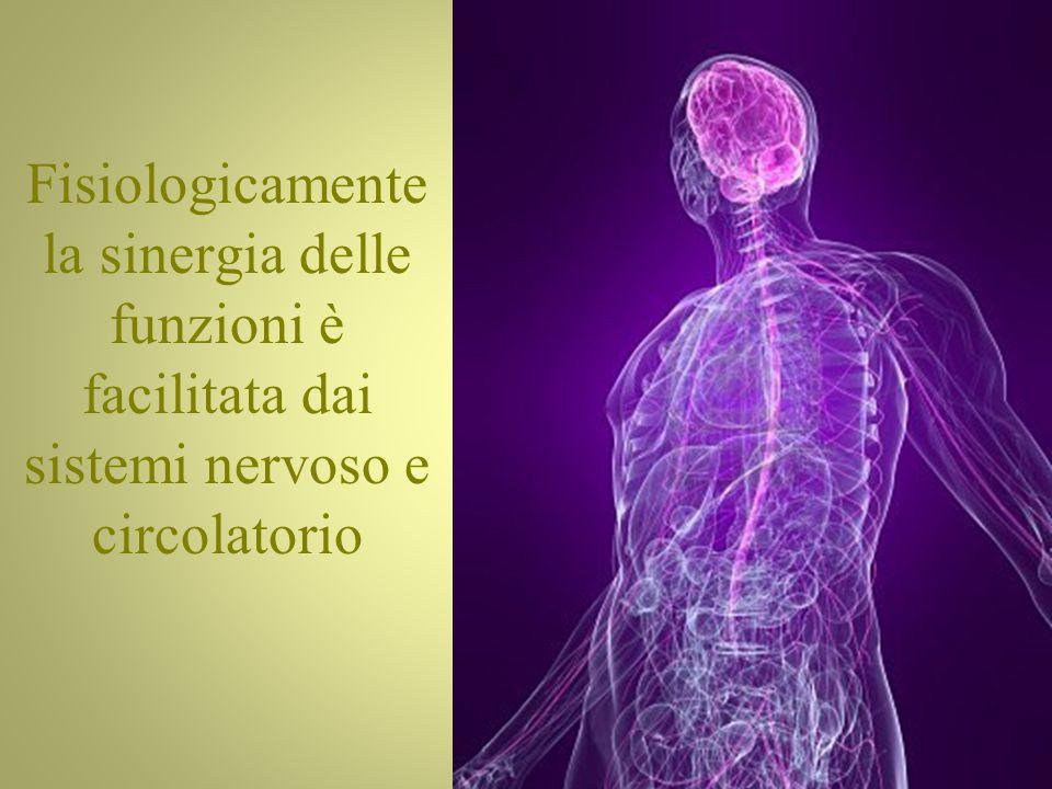 Fisiologicamente la sinergia delle funzioni è facilitata dai sistemi nervoso e circolatorio