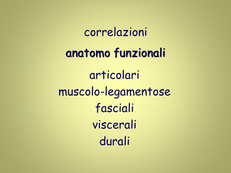 correlazioni anatomo funzionali articolari muscolo-legamentose fasciali viscerali durali