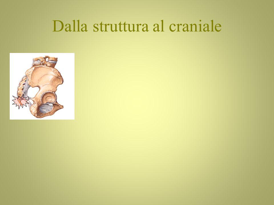 Dalla struttura al craniale