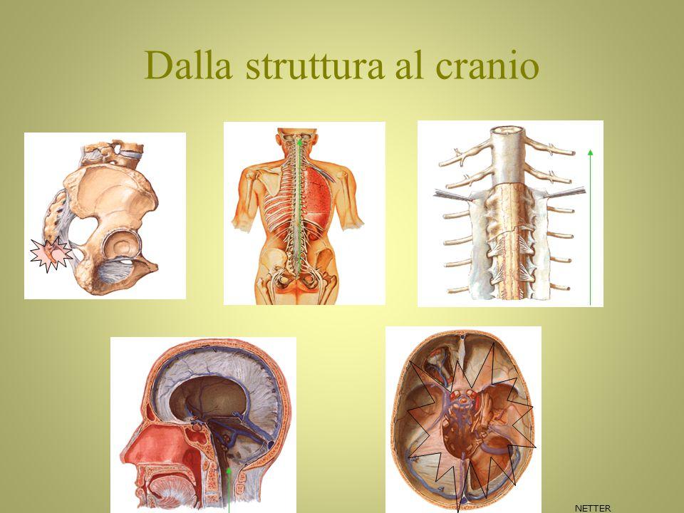 Dalla struttura al cranio NETTER