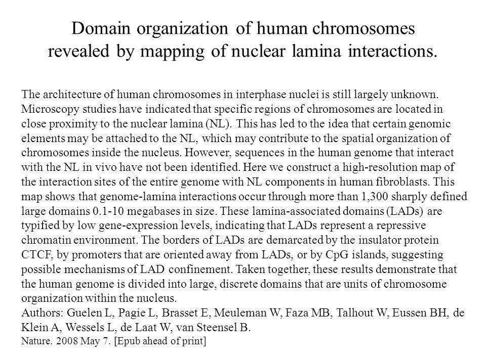 Domain organization of human chromosomes revealed by mapping of nuclear lamina interactions. The architecture of human chromosomes in interphase nucle