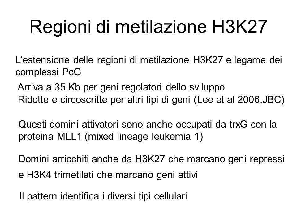 Regioni di metilazione H3K27 L'estensione delle regioni di metilazione H3K27 e legame dei complessi PcG Arriva a 35 Kb per geni regolatori dello svilu