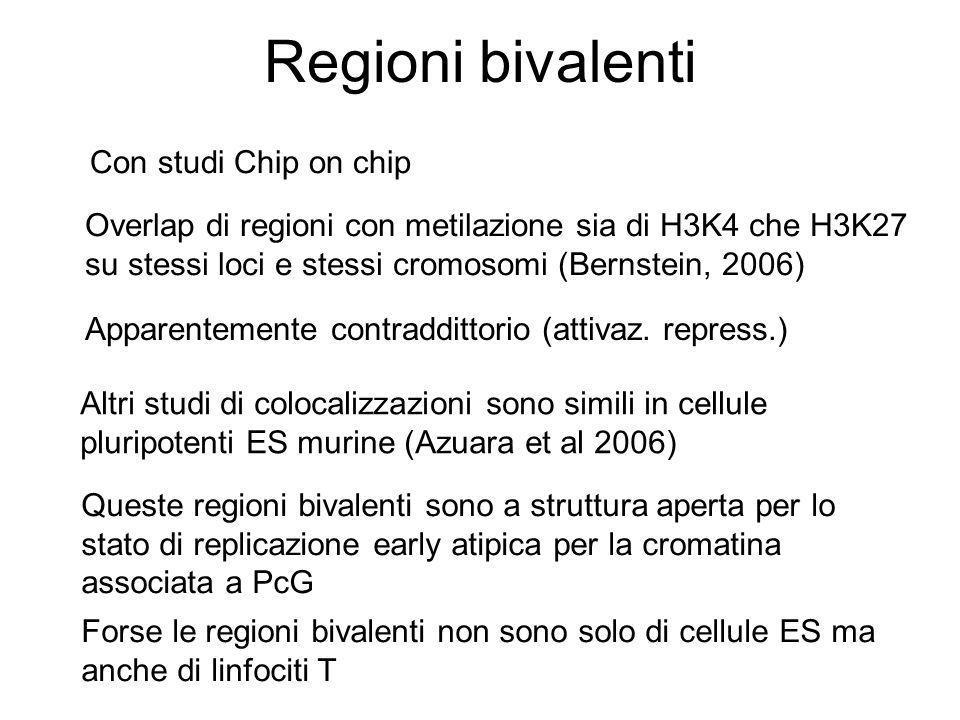 Regioni bivalenti Con studi Chip on chip Overlap di regioni con metilazione sia di H3K4 che H3K27 su stessi loci e stessi cromosomi (Bernstein, 2006)