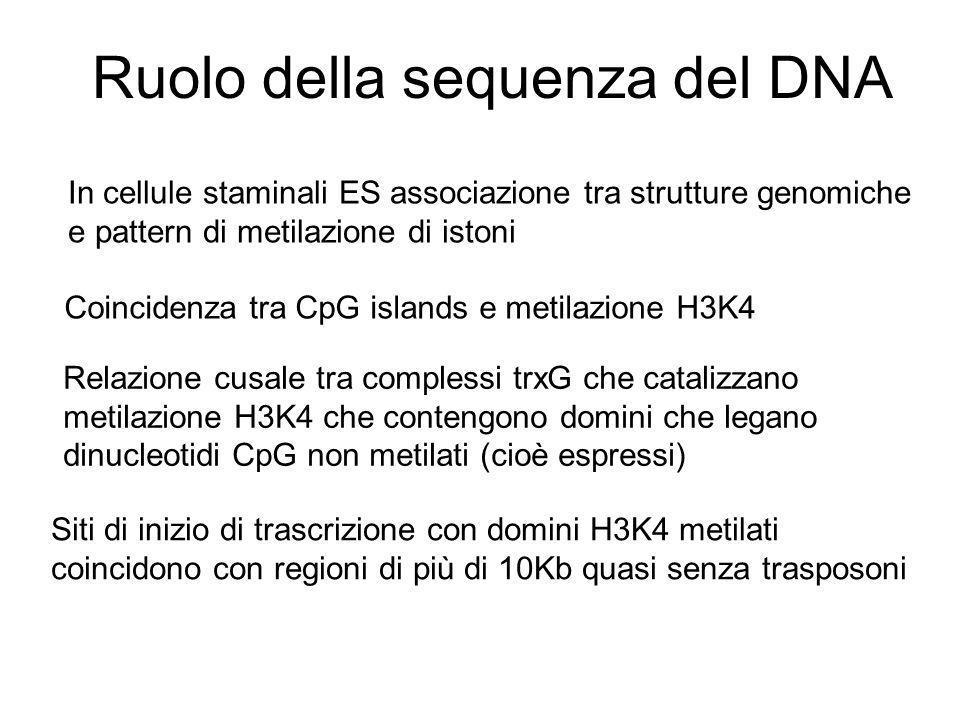 Ruolo della sequenza del DNA In cellule staminali ES associazione tra strutture genomiche e pattern di metilazione di istoni Coincidenza tra CpG islan