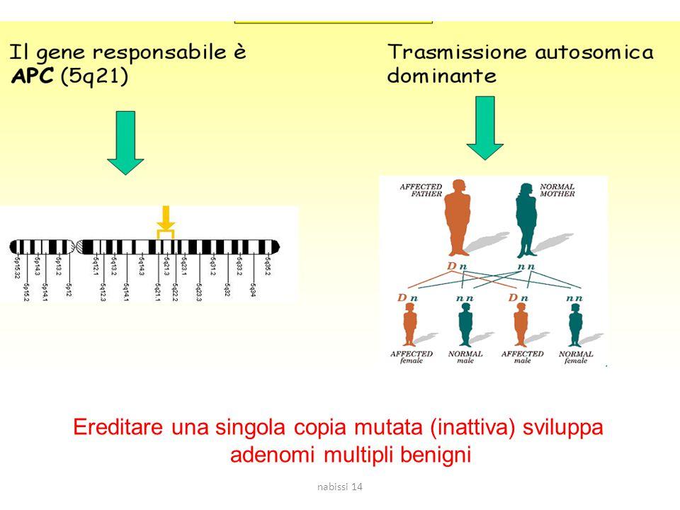 Ereditare una singola copia mutata (inattiva) sviluppa adenomi multipli benigni nabissi 14