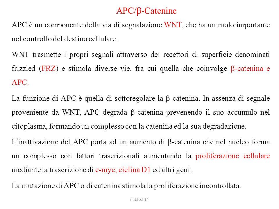 APC/  -Catenine APC è un componente della via di segnalazione WNT, che ha un ruolo importante nel controllo del destino cellulare. WNT trasmette i pr