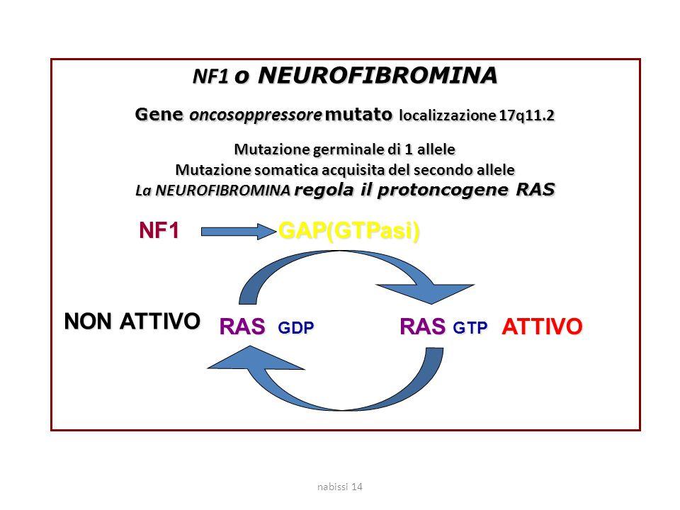 NF1 o NEUROFIBROMINA Gene oncosoppressore mutato localizzazione 17q11.2 Mutazione germinale di 1 allele Mutazione somatica acquisita del secondo allel