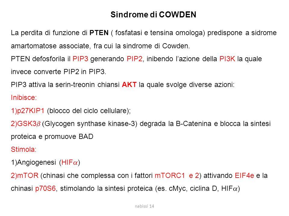 Sindrome di COWDEN La perdita di funzione di PTEN ( fosfatasi e tensina omologa) predispone a sidrome amartomatose associate, fra cui la sindrome di C