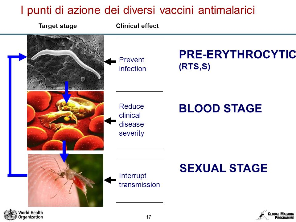 17 Prevent infection Reduce clinical disease severity Interrupt transmission Target stage Clinical effect PRE-ERYTHROCYTIC (RTS,S) BLOOD STAGE SEXUAL STAGE I punti di azione dei diversi vaccini antimalarici