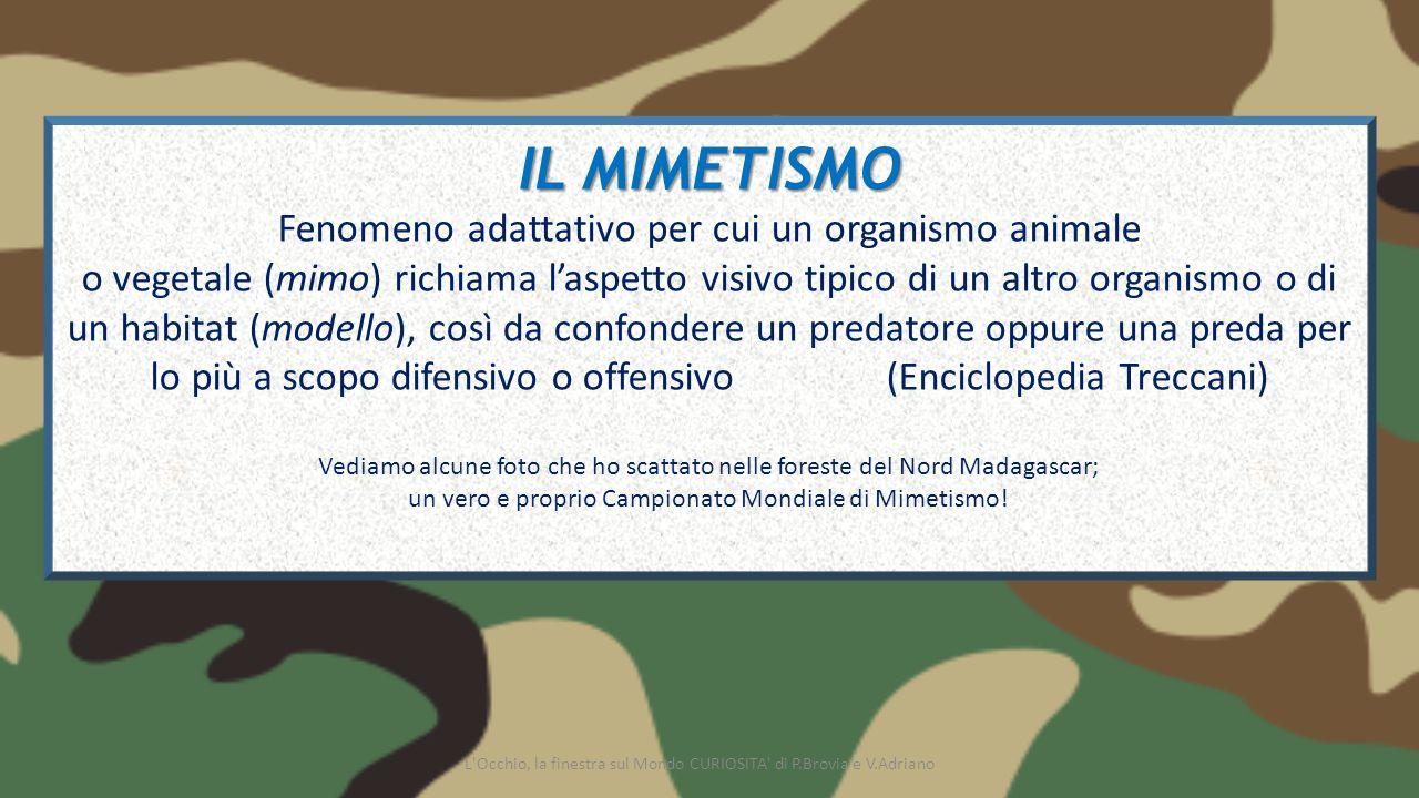 IL MIMETISMO Fenomeno adattativo per cui un organismo animale o vegetale (mimo) richiama l'aspetto visivo tipico di un altro organismo o di un habitat