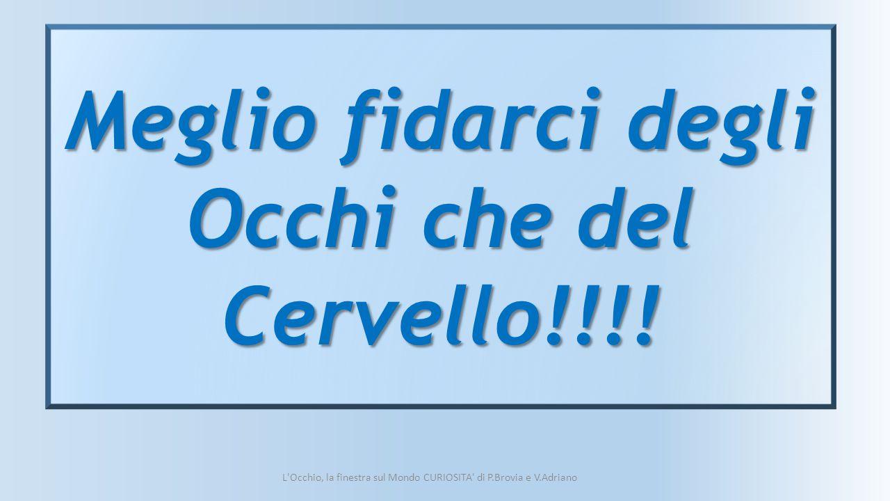 L'Occhio, la finestra sul Mondo CURIOSITA' di P.Brovia e V.Adriano Meglio fidarci degli Occhi che del Cervello!!!!