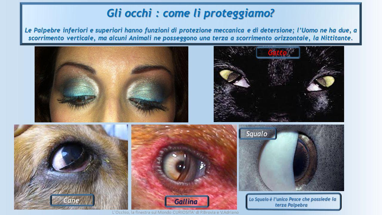 Gli occhi : come li proteggiamo? Le Palpebre inferiori e superiori hanno funzioni di protezione meccanica e di detersione; l'Uomo ne ha due, a scorrim