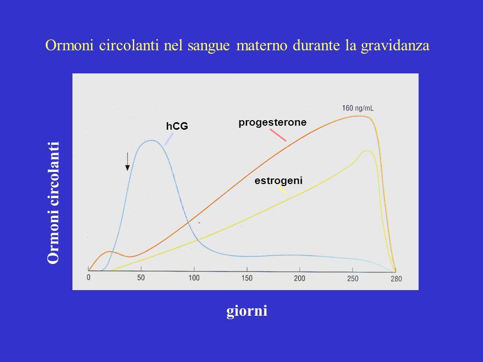 hCG progesterone estrogeni giorni Ormoni circolanti Ormoni circolanti nel sangue materno durante la gravidanza