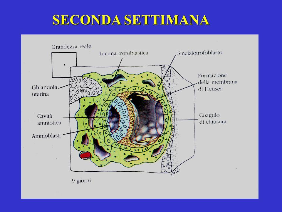 SECONDA SETTIMANA