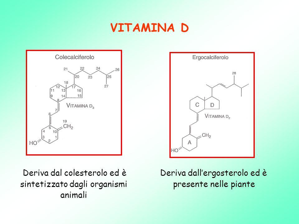 VITAMINA D Deriva dal colesterolo ed è sintetizzato dagli organismi animali Deriva dall'ergosterolo ed è presente nelle piante