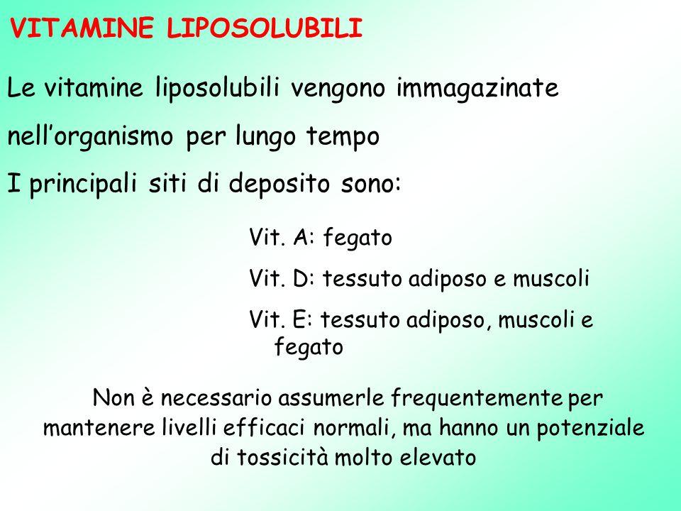 Le vitamine liposolubili vengono immagazinate nell'organismo per lungo tempo I principali siti di deposito sono: Vit.