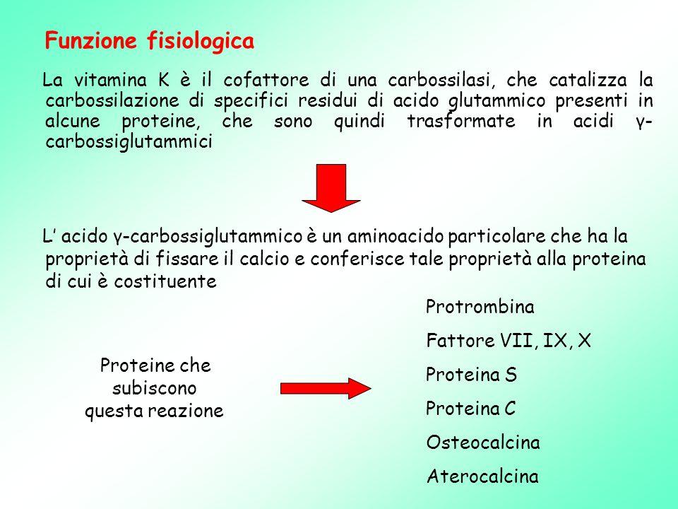 La vitamina K è il cofattore di una carbossilasi, che catalizza la carbossilazione di specifici residui di acido glutammico presenti in alcune proteine, che sono quindi trasformate in acidi γ- carbossiglutammici L' acido γ-carbossiglutammico è un aminoacido particolare che ha la proprietà di fissare il calcio e conferisce tale proprietà alla proteina di cui è costituente Funzione fisiologica Proteine che subiscono questa reazione Protrombina Fattore VII, IX, X Proteina S Proteina C Osteocalcina Aterocalcina