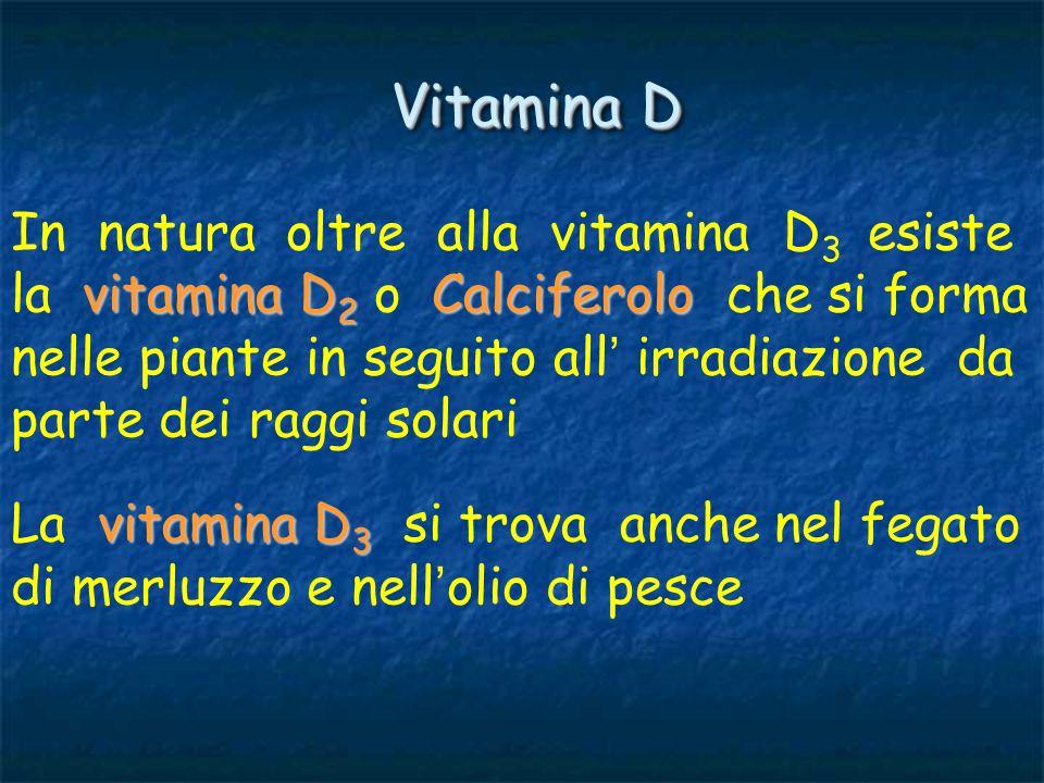 vitamina D La vitamina D ingerita viene assorbita nell ' intestino con i grassi e accumulata nel fegato, nel rene, nelle ossa e nella stessa mucosa intestinale metabolismo del Calcio e del Fosforo E ' un fattore essenziale per il normale metabolismo del Calcio e del Fosforo e quindi dello scheletro, che nell ' organismo è il tessuto principalmente interessato nel ricambio di questi minerali drossi-derivati) drossi-derivato Agisce dopo essere stata trasformata nel fegato in molecole attive (idrossi-derivati) ad opera di enzimi idrossilanti.