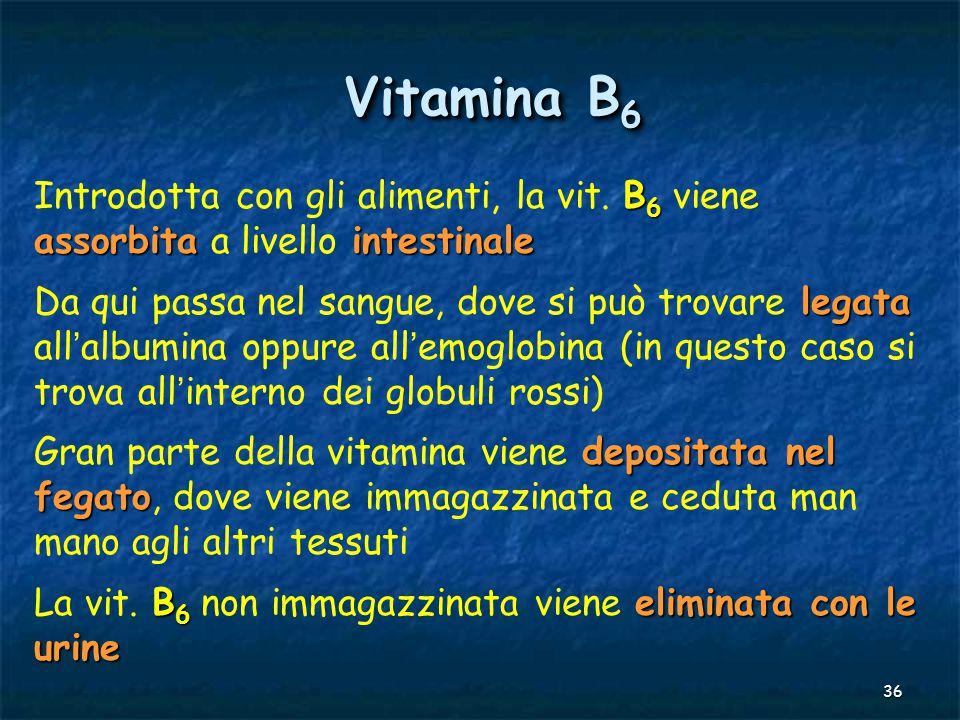 36 Vitamina B 6 B 6 assorbitaintestinale Introdotta con gli alimenti, la vit. B 6 viene assorbita a livello intestinale legata Da qui passa nel sangue